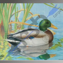 Animal Face Duck